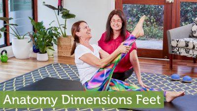 Anatomy Dimensions Feet